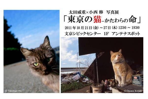 東京の猫 DM裏(改訂版).jpg